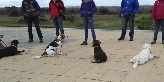 perros-entrenando